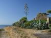 Torre di Punta Licosa