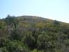 Costa del Bizzocco